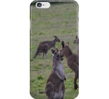 Kangaroos Side road Eltham north Victoria Australia 20160618 7145 iPhone Case/Skin