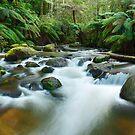 Toorongo River, Gippsland, Victoria, Australia by Michael Boniwell