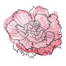Carnation #5 - sticker only by Vicky Webb