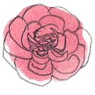 Carnation #3 - sticker only by Vicky Webb