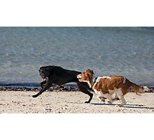 Black dog wins! Photographic Print