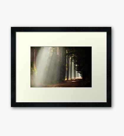 Foggy Road Framed Print