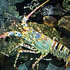 Colourful Crayfish by Margaret Stevens