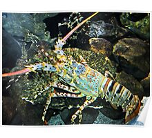 Colourful Crayfish Poster