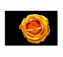 Peach Orange Rose Art Print