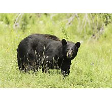 Black bear in a green field Photographic Print