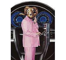Pink Suited Ram Photographic Print