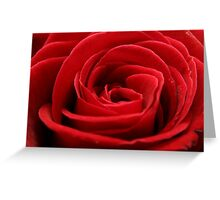 Close up of a beautiful red rose Greeting Card