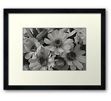 Yellow Brown Eyed Susan In Black And White  Framed Print