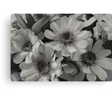 Yellow Brown Eyed Susan In Black And White  Canvas Print