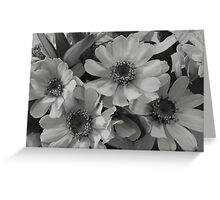 Yellow Brown Eyed Susan In Black And White  Greeting Card