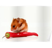 Cutout of a curious hamster and long hot red pepper  Poster
