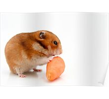 Cutout of a curious hamster and a carrot on white background Poster