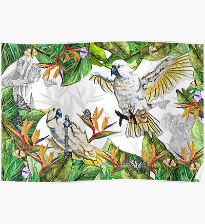 Drawing Paradise - Cockatoos and Koalas Poster