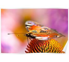 Painted Lady And The Sweet Feast Of Colors Poster