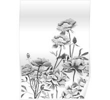 black and white peonies painting Poster