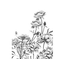 black and white peonies painting Photographic Print
