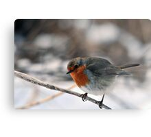 Robin in winter countryside Metal Print