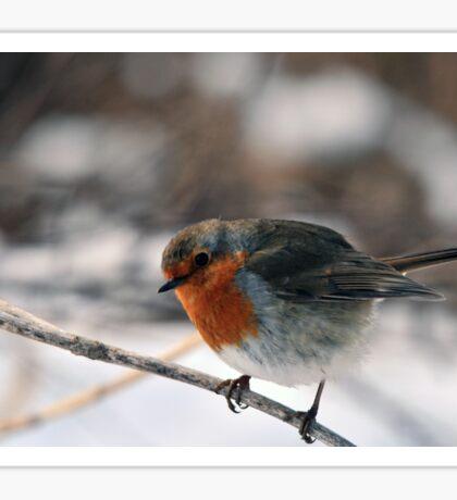 Robin in winter countryside Sticker