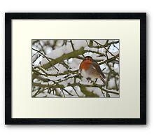 Robin in winter landscape Framed Print