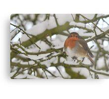 Robin in winter landscape Metal Print