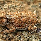 Desert Horned Toad (Horny Toad) by CarolM