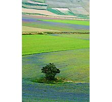 A tree between flowers of the lentil Photographic Print