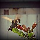 Hummingbird by angelandspot