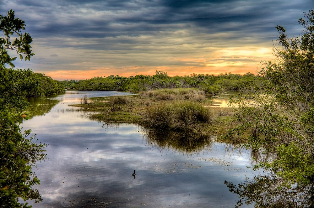 Ding Darling Bailey Tract by Bill Wetmore