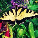 Swallowtail Butterfly by angelandspot
