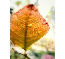 Blueberry Leaf in the Autumn Photographic Print