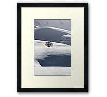 Lonely tree in the snow Framed Print