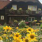 Old Austrian House by Christine Wilson