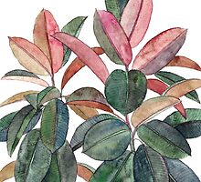 Rubber Plant by micklyn