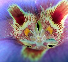 Deep Inside a Mariposa Lily by Chris Gudger