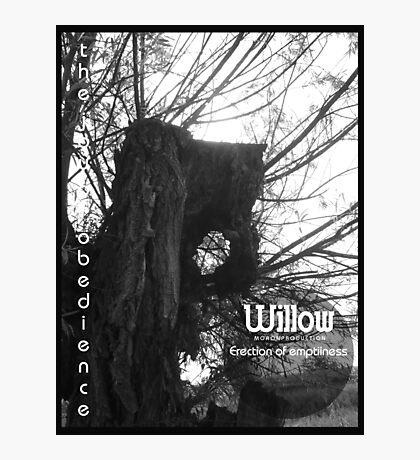Willow 1 Photographic Print