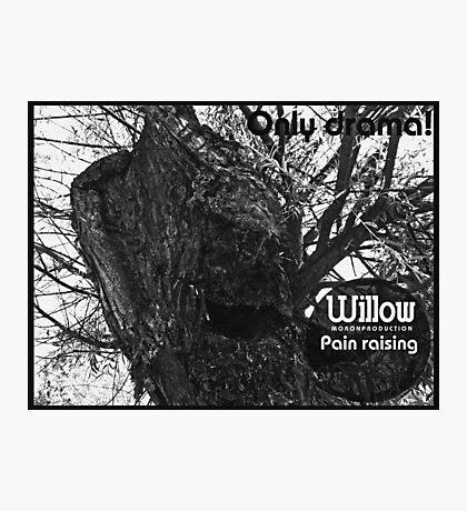 willow 2 Photographic Print