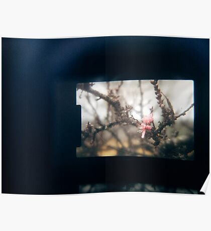 Through the viewfinder - winter blossoms Poster