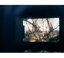 Through the viewfinder - winter blossoms Photographic Print