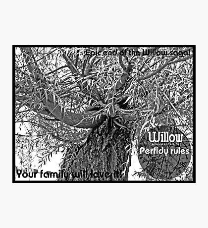 Willow 3 Photographic Print