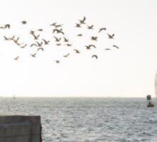 Key West Sea Gulls Sticker