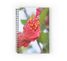 Curled Petals of A Red Hibiscus Bud Spiral Notebook