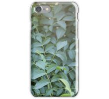 Plant in sunlight iPhone Case/Skin