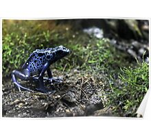 dart frog Poster
