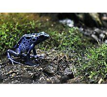 dart frog Photographic Print