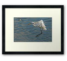 Great Egret (Ardea alba) (VI) Framed Print