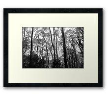 Listen To The Trees Framed Print
