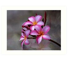 Hawaiian Plumeria Blooms Art Print