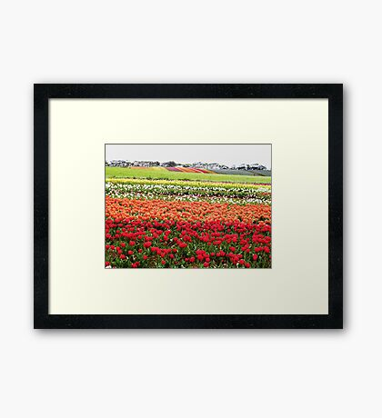 Bands of beauty Framed Print