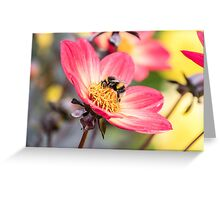 Bumble Bee collecting pollen from a flower Greeting Card